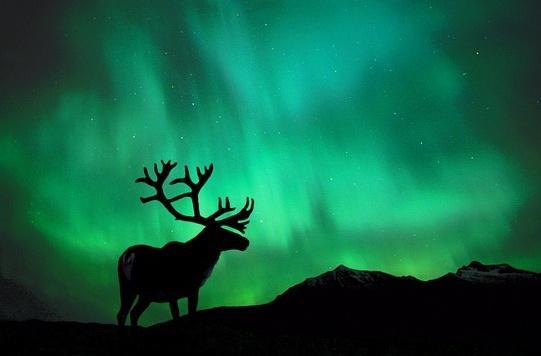 """麒麟——悬疑两千年的北方""""神鹿""""(1)- 从驯鹿眼睛的特异功能说起"""