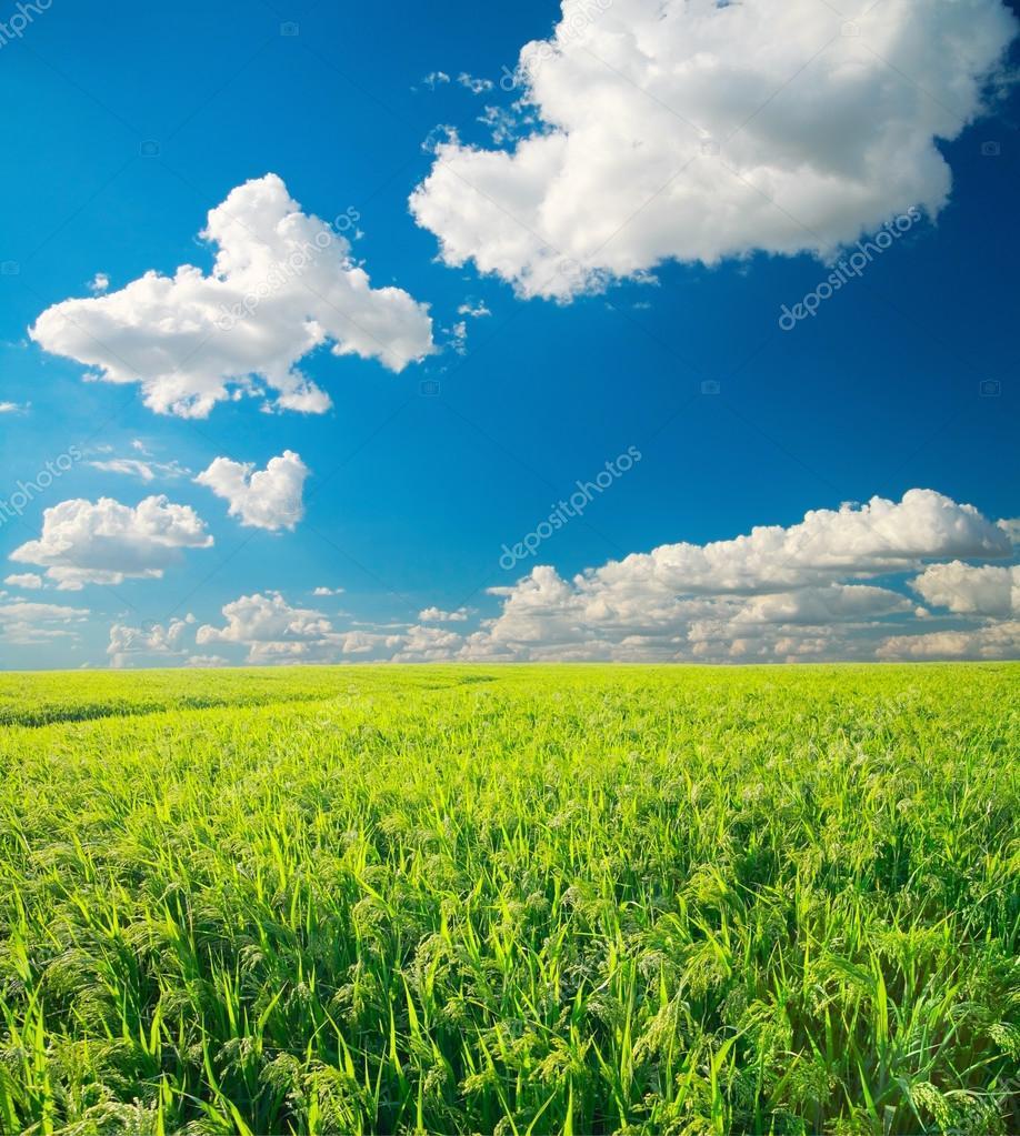 北风拂粟麦,万里渡河汾——史前中国农业化的驱动力量(1)