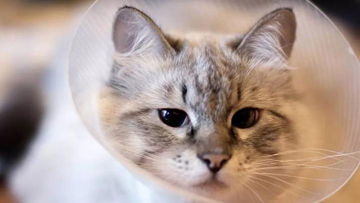花粉 症 猫
