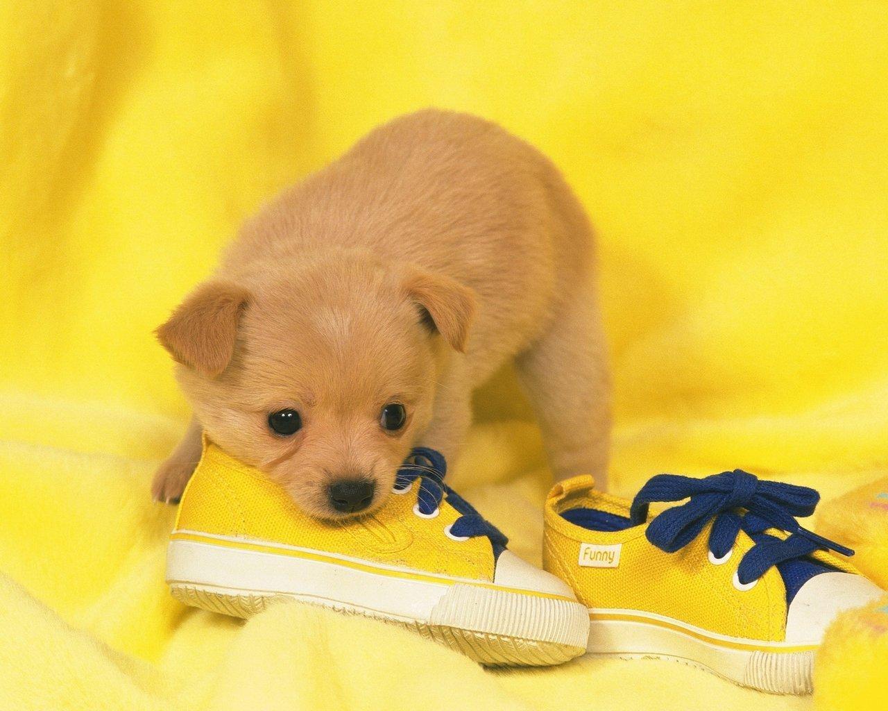 小狗身上的气味_下雨天不能遛狗,狗狗大小便怎么办? - 知乎