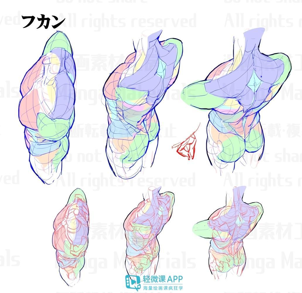 人体知识_100P人体侧面、背面绘画素材,360度无死角! - 知乎