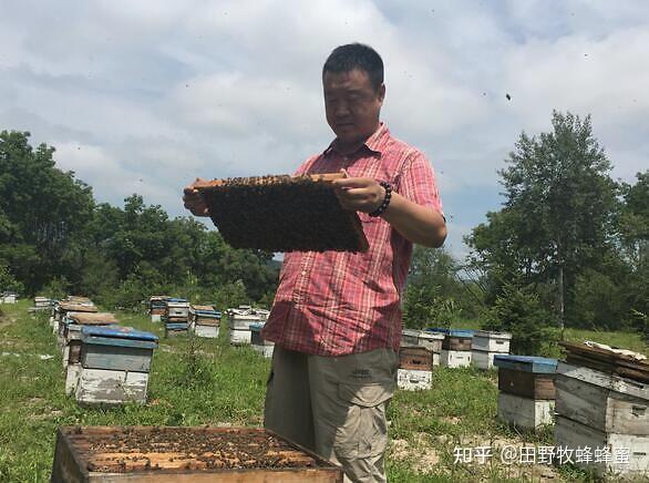 蜜蜂凝胶仍然是皇家王,哪个更好?蜂胶和皇家果冻?