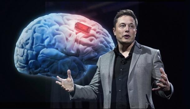 Neuralink 与大脑的神奇未来·第二部分:大脑
