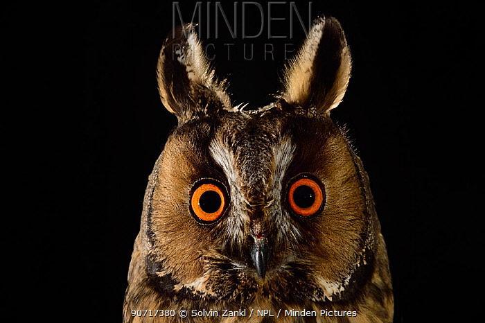 猫头鹰的大脸盘,居然是用来听声音的!