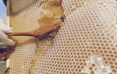 你能喝蜂蜜嗎?當你感冒時,你可以喝蜂蜜水嗎?