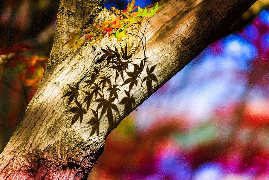 秋天的诗_这10首关于秋天的小诗,极美 - 知乎