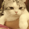 一只无情的小猫咪