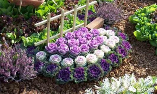 7月最合适播种这些花撒下一粒种子8月就可以赏花啦 知乎