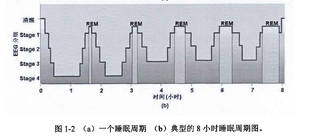 典型的8小时睡眠周期图