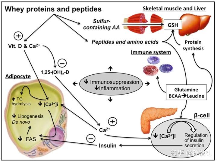 运动能提高免疫力吗?