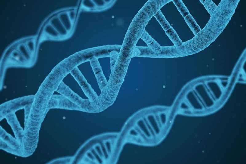 基因是如何表达成为蛋白质的?(完整干货版)