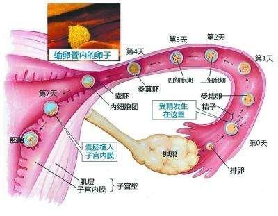 做输卵管通液好_输卵管通液术的作用是什么,什么时候做合适? - 知乎