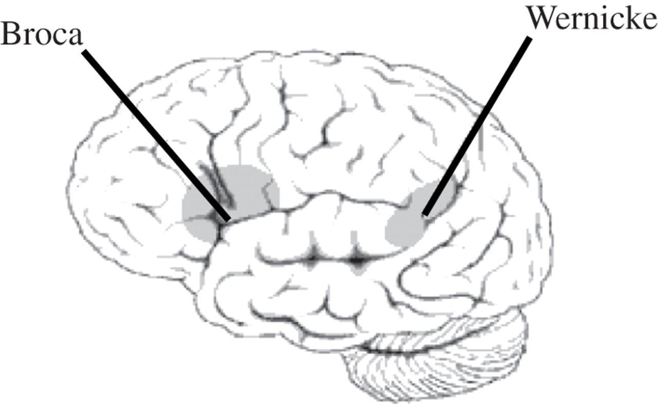 人类大脑中真得存在语言区吗?