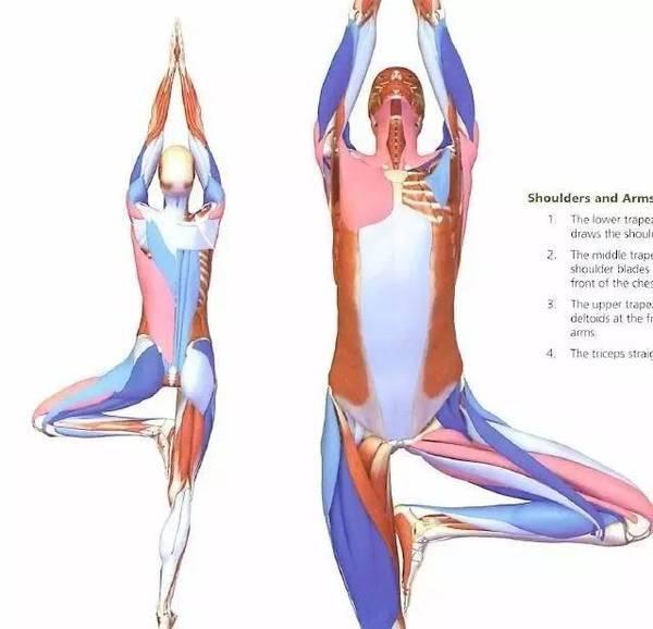 练瑜伽 无法减重_为什么你练瑜伽却瘦不了?|减而言脂 - 知乎