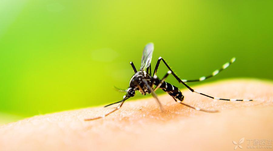 夏日将至,最靠谱的驱蚊方式是什么?