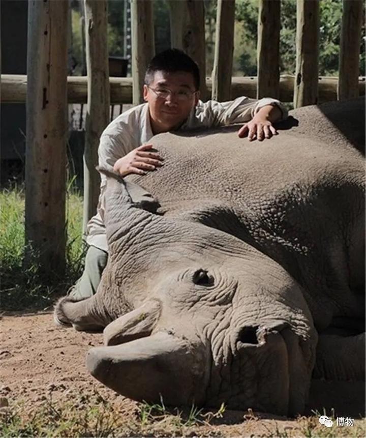 关于北白犀,说起来总是很沉重