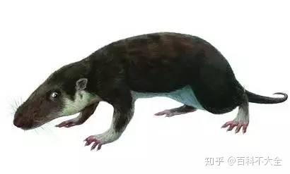 恐龙家族大灭绝_动物篇(30)·大灭绝(下) - 知乎