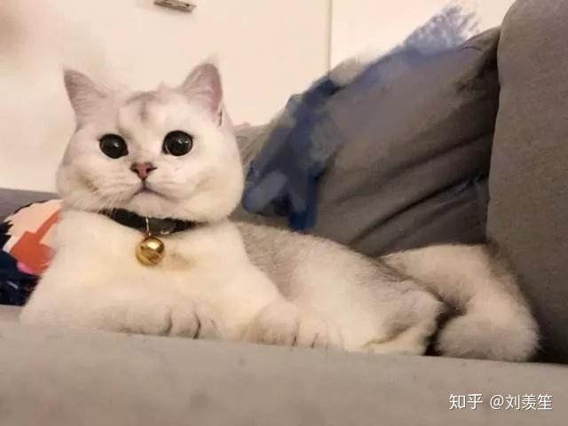 萌妹子是啥意思_为什么现在这么多人吸猫,吸猫是什么意思? - 知乎