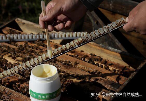 最好的品质在哪里?中国皇家果冻是最好的吗?