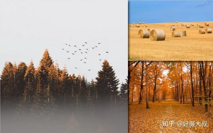 """最美秋天照,都是""""黄""""出来的吗?"""