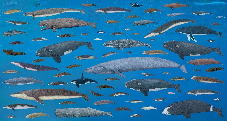 "「Rise of Mammals丨兽族崛起○2」""鲸""奇档案—鲸类演化漫谈"