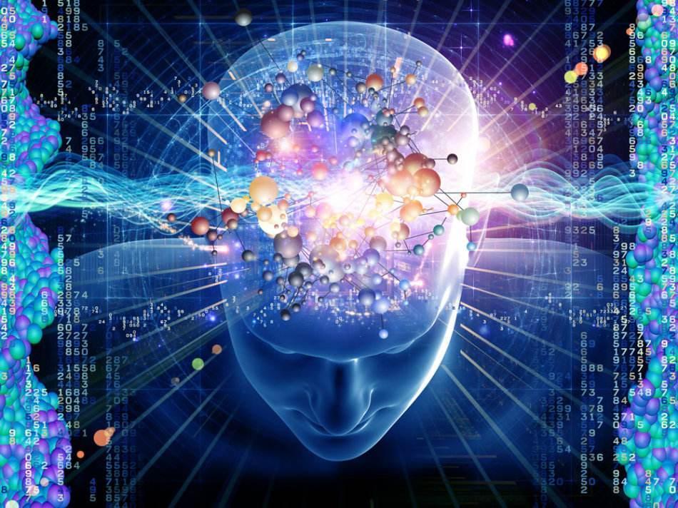 来了!神经科学研究中的十九个明星热点脑区