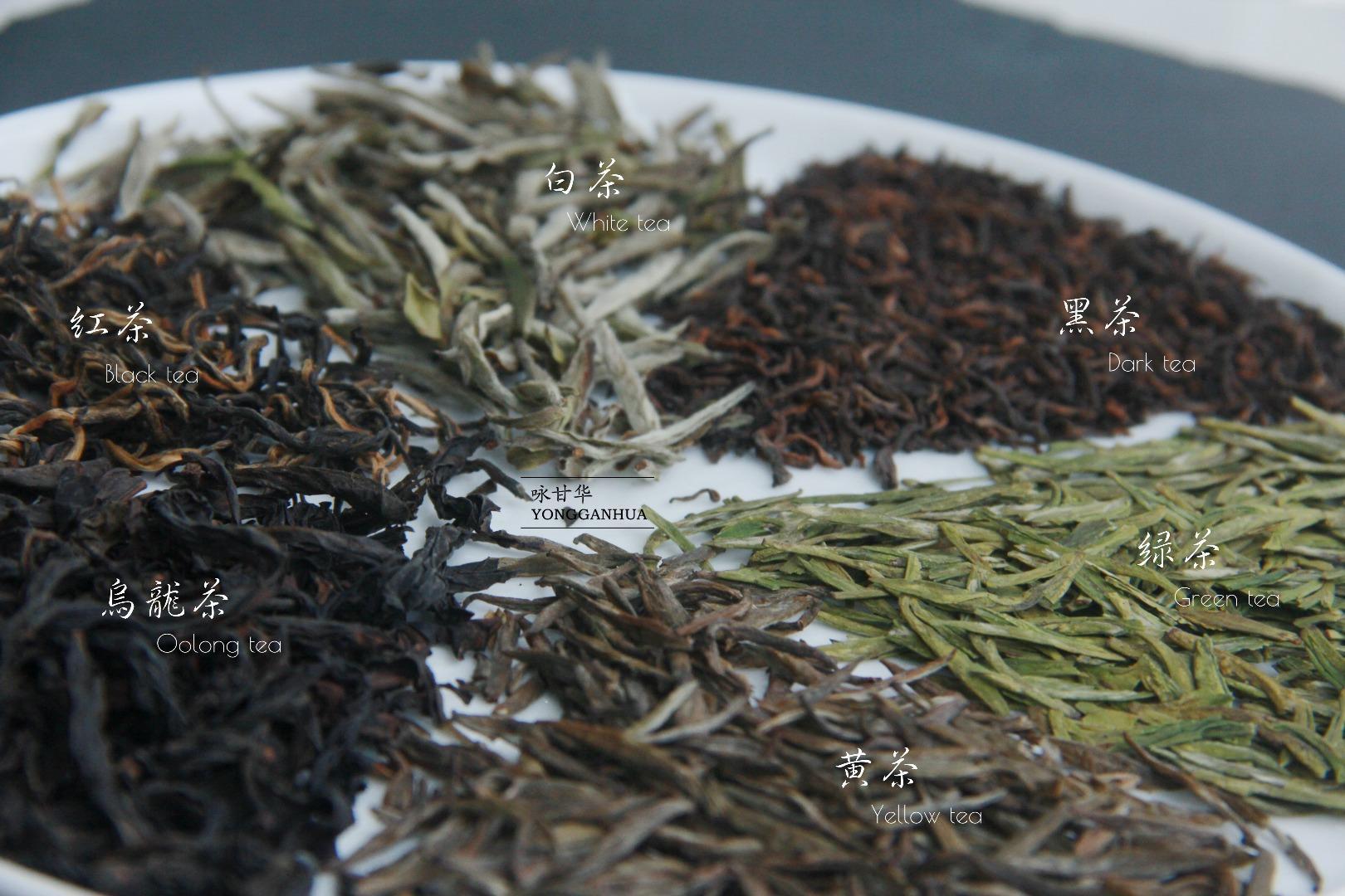 我们在学校里学了七年的茶学,现在来告诉你学茶的正确步骤
