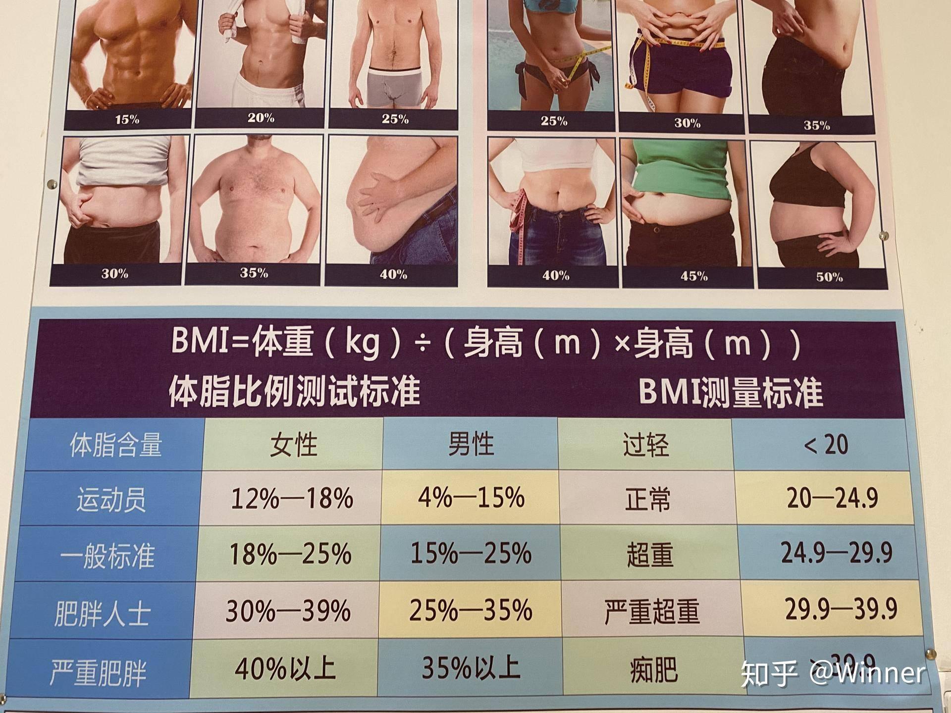 率 女性 22 脂肪 体