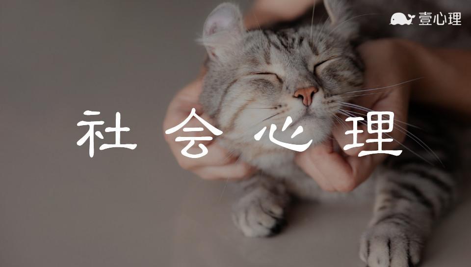 """""""逃回国就安全了!"""":中国留学生虐猫致死背后,藏着无法制裁的人性"""