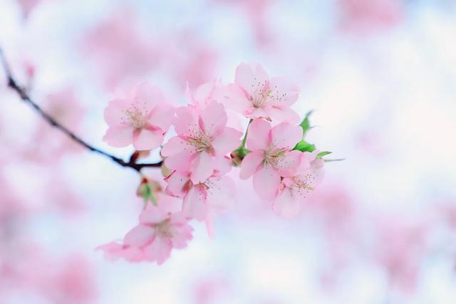 苏东坡笔下的春天,诗情画意,写尽人生百味!
