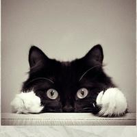 猫xian森的全栈之旅