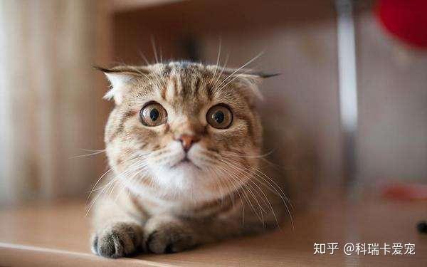 猫 低 体温