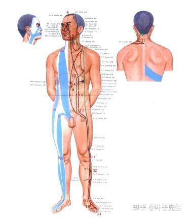 肋骨 位置