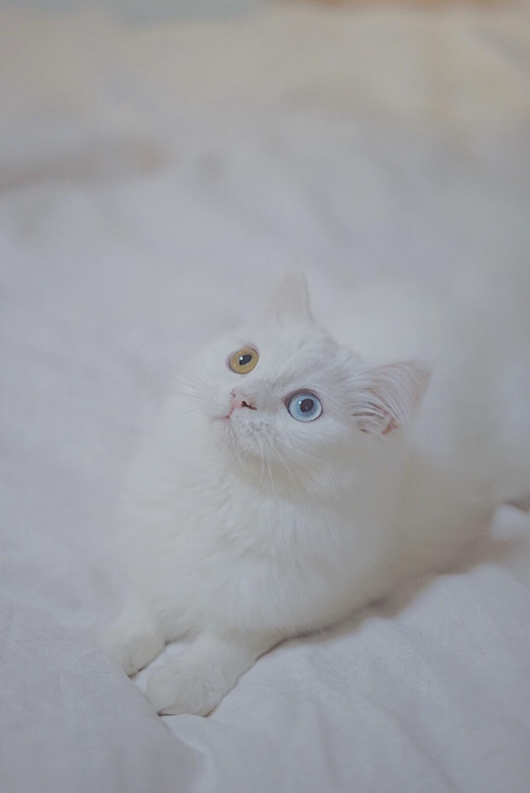 蓦然回首搞笑小仙_养猫的大家,你们的猫咪都叫什么名字?性格怎样?猫如其名吗 ...