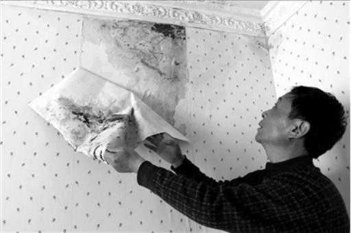 硅藻泥、乳胶漆、墙纸,哪个好?