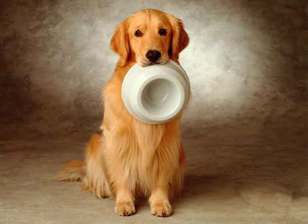 wwwgougou_狗狗出生到成年1-12个月后的喂养方法和自制宠物狗粮教程 - 知乎