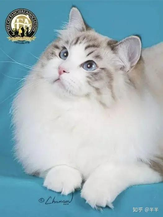 会动的色图片_史上最全品种猫介绍大全! - 知乎