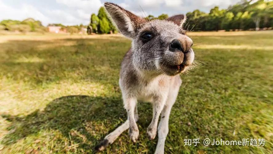 澳洲旅游签证被拒签。?