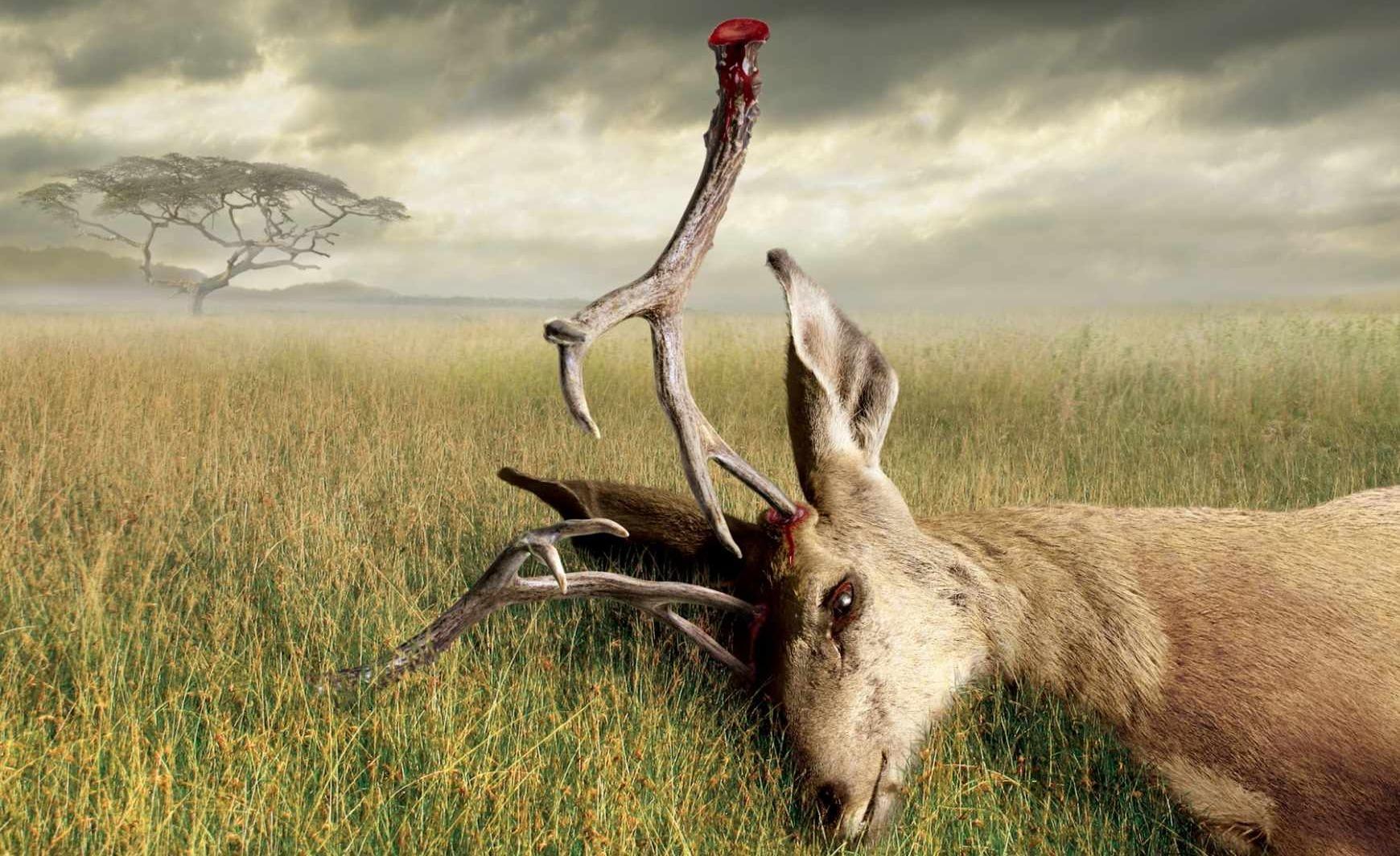 在非洲保护野生动物的人们