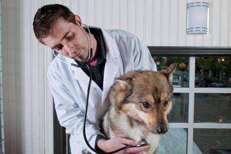 狗狗心脏衰竭的危害