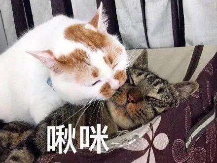 有哪些可爱的动物表情包?